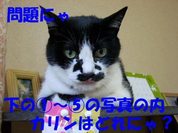 Dscn0602_2